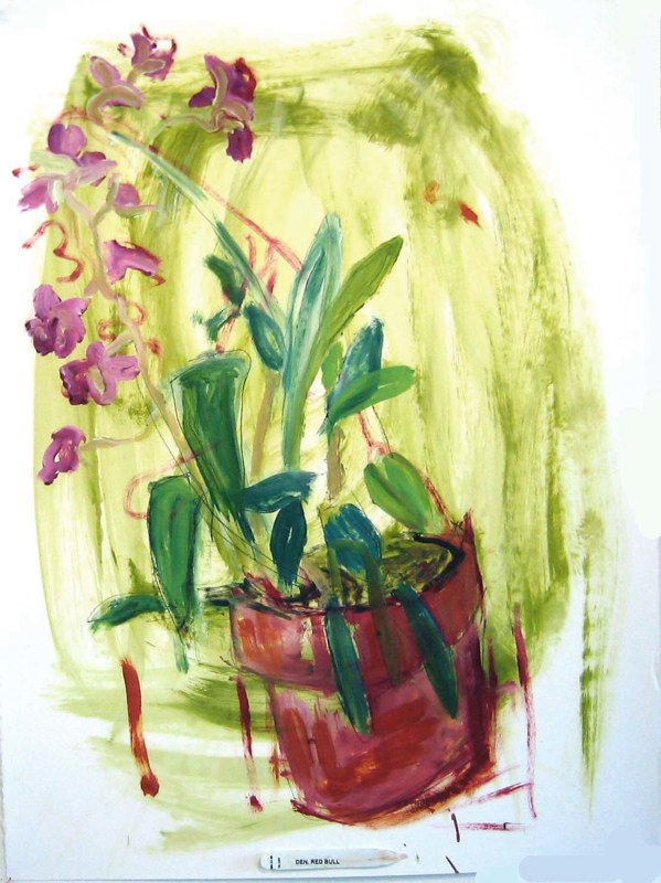 Dendrobium on Green